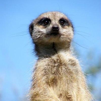 XVG Meerkat