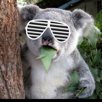 Lightning #NOINPUT Koala 🐨⚡
