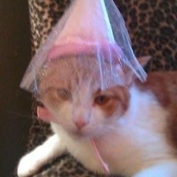 KittyKittyKimmy