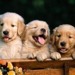 PuppiesMakeMeHappy