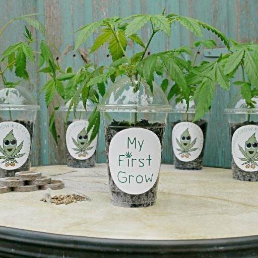 My First Grow