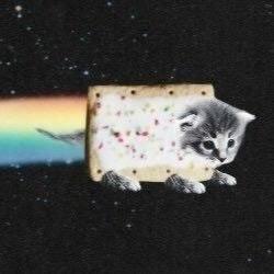 gifs de gatinhos