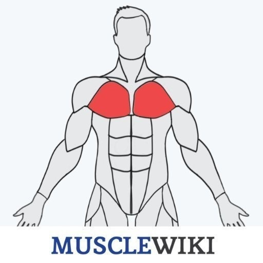 MuscleWiki