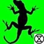 A.Lizard