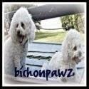 bichonpawz