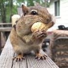DearSquirrel