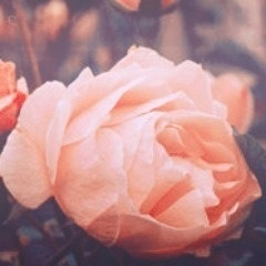 Cezanne B.