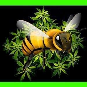 CannabisBee