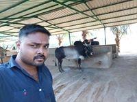 Sridhar R Krishnan