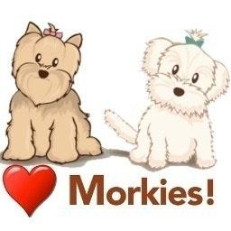 Morkie Nation